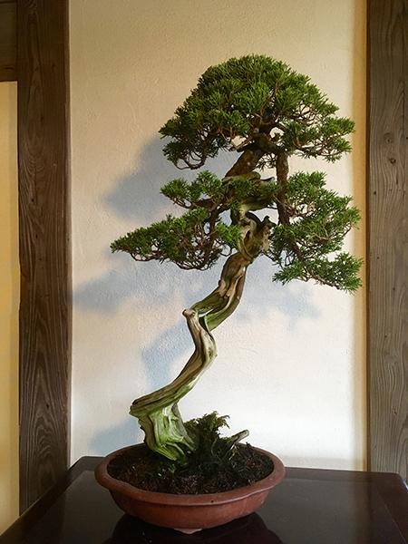 bonsai_07_01.jpg
