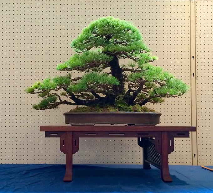 wabi-sabi-bonsai-world08_01.jpg