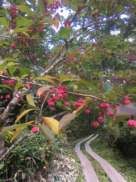 wabi-sabi-bonsai-world09_02.jpg