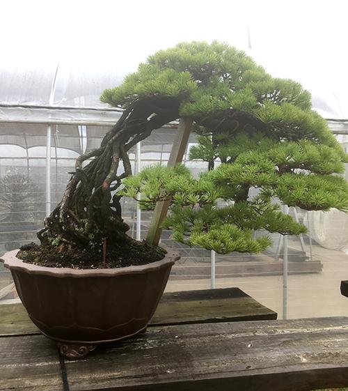 wabi-sabi-bonsai-world10_02.jpg