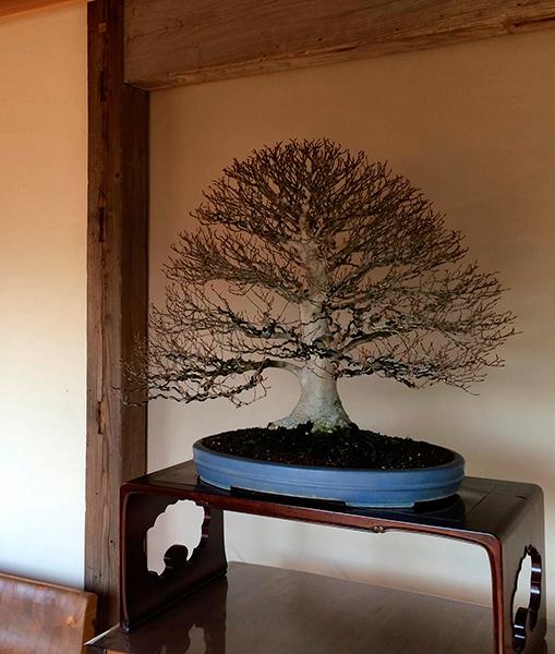 wabi-sabi-bonsai-world11_03.jpg