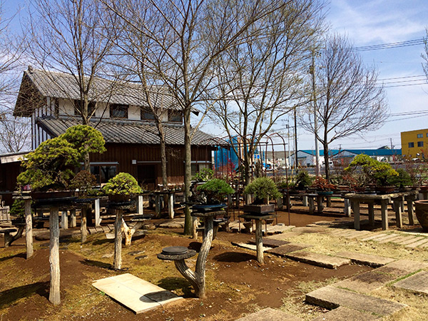 wabi-sabi-bonsai-world11_04.jpg