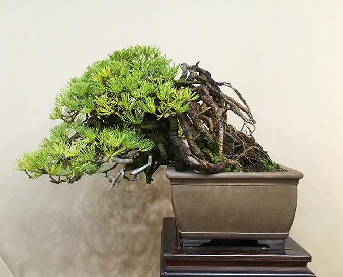 http://www.wochikochi.jp/english/serialessay/bonsai_03_04.jpg