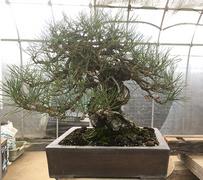 bonsai_05_02.jpg