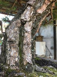bonsai_05_03.jpg