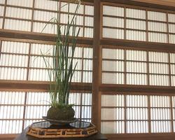 bonsai_06_02.jpg