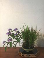bonsai_06_03.jpg
