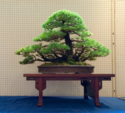 wabi-sabi-bonsai-world08_01.jpg