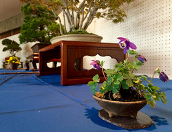 wabi-sabi-bonsai-world08_02.jpg