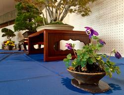 wabi-sabi-bonsai-world08_02.jpg