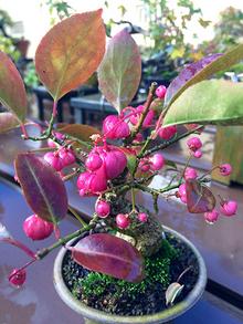 wabi-sabi-bonsai-world08_03.jpg