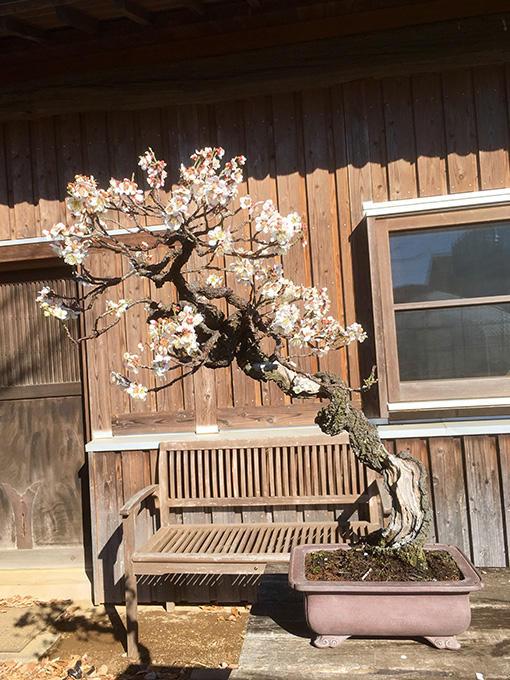http://www.wochikochi.jp/serialessay/bonsai_01_03.jpg