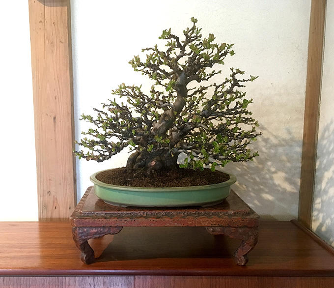 http://www.wochikochi.jp/serialessay/bonsai_02_01.jpg