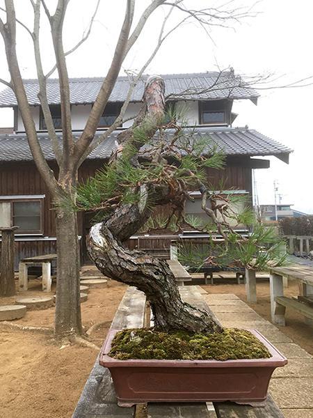 http://www.wochikochi.jp/serialessay/bonsai_02_02.jpg