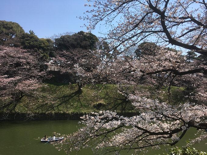 http://www.wochikochi.jp/serialessay/bonsai_03_02.jpg