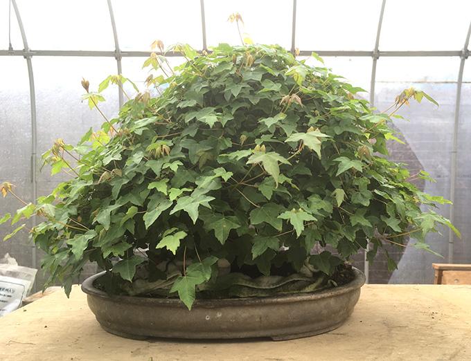 http://www.wochikochi.jp/serialessay/bonsai_04_01.jpg