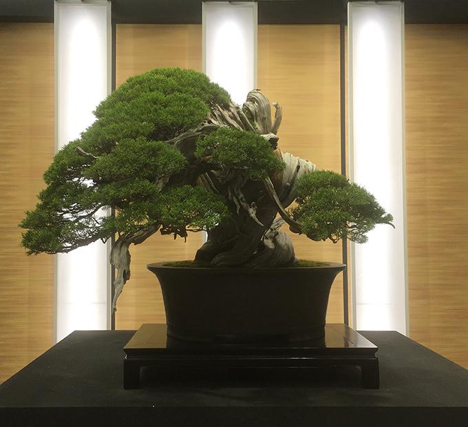 http://www.wochikochi.jp/serialessay/bonsai_04_03.jpg