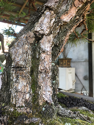 http://www.wochikochi.jp/serialessay/bonsai_05_03.jpg