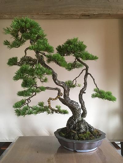 http://www.wochikochi.jp/serialessay/bonsai_05_04.jpg