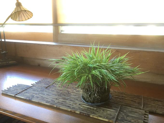 http://www.wochikochi.jp/serialessay/bonsai_06_01.jpg