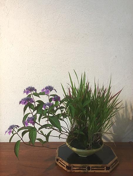 http://www.wochikochi.jp/serialessay/bonsai_06_03.jpg