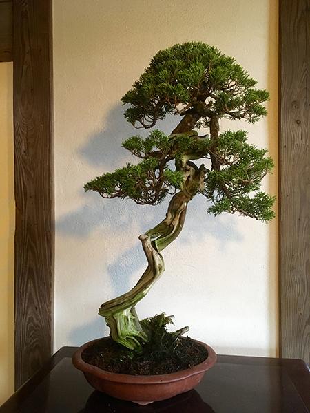 http://www.wochikochi.jp/serialessay/bonsai_07_01.jpg