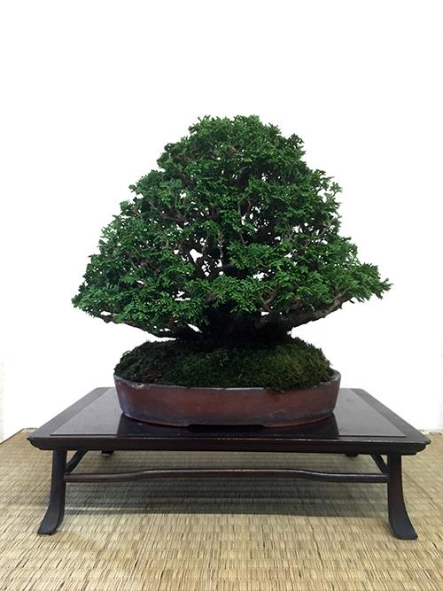 http://www.wochikochi.jp/serialessay/bonsai_07_04.jpg