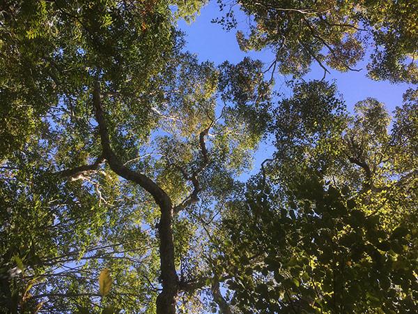 http://www.wochikochi.jp/serialessay/wabi-sabi-bonsai-world09_03.jpg