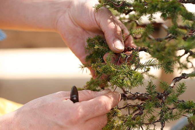 http://www.wochikochi.jp/serialessay/wabi-sabi-bonsai-world11_01.jpg
