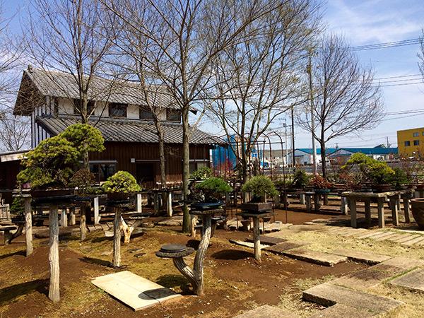 http://www.wochikochi.jp/serialessay/wabi-sabi-bonsai-world11_04.jpg